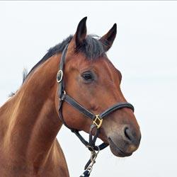 Gebitsverzorging paarden