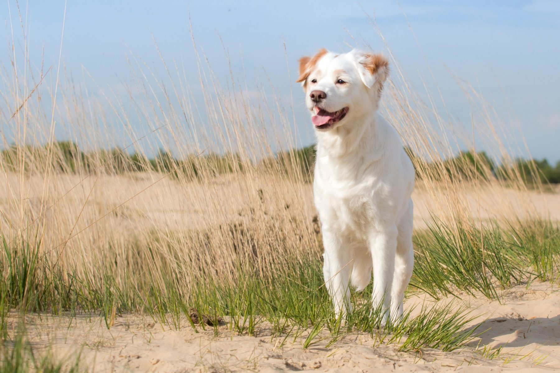 Fotomodel Hond Voor Trimsalon