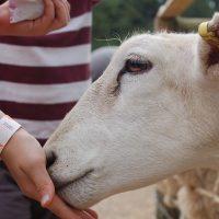 Een simpele tip: Was altijd je handen na een bezoek aan de kinderboerderij in verband met zoonose