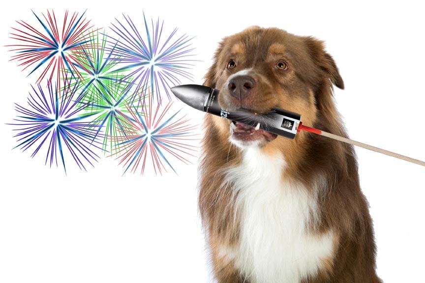 Vuurwerk Angst Bij Honden En Katten