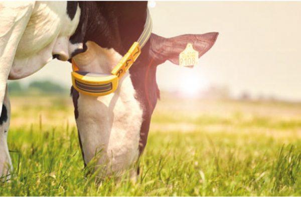 Gezondheidsmonitoring Bij Koeien: Vraag Het Aan Onze Expert