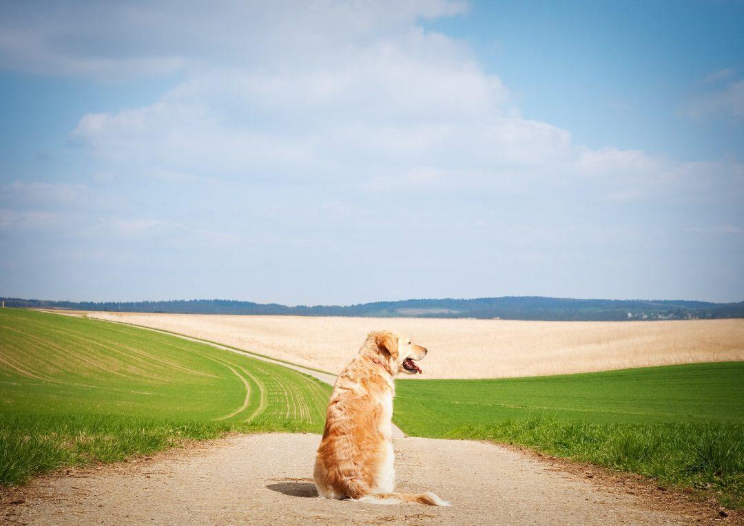 Oververhitting Bij Honden