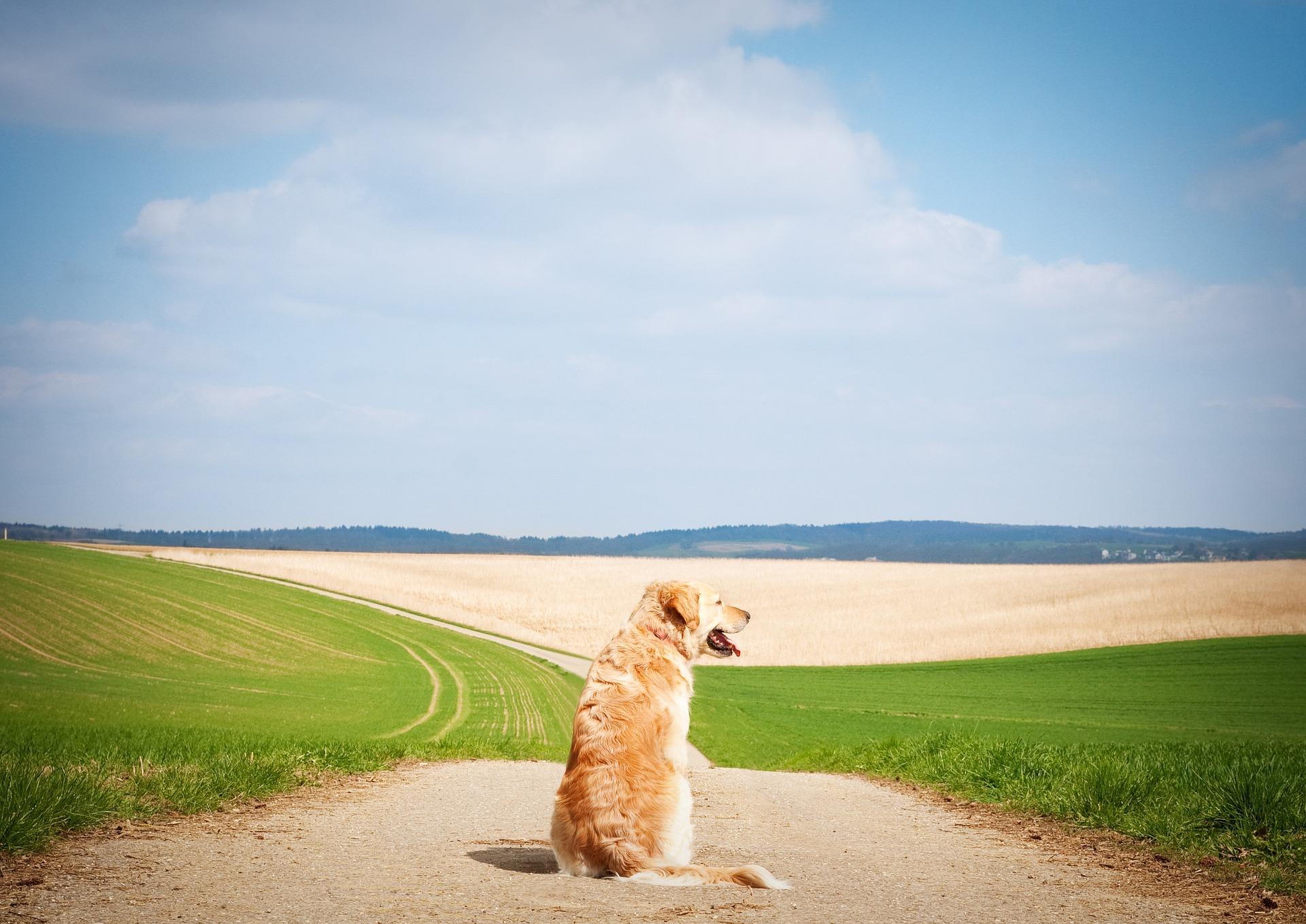 Oververhitting Bij De Hond