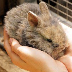 konijn aangeboden leijdal