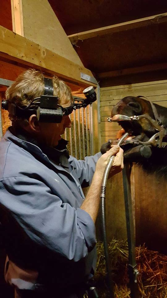 Paarden Tandarts Hans Caron Doet Een Gebitscorrectie Bij Een Paard Onder Verdoving.