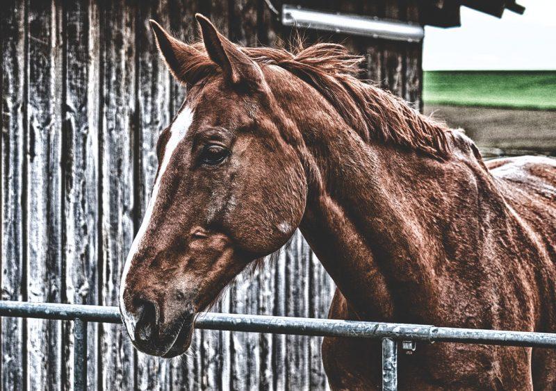 Cushing Onderzoek Voor Paarden