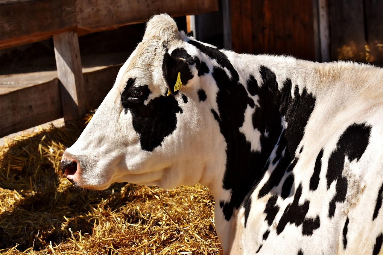 Lunchbijeenkomst: Koeien Drenchen 25 Oktober