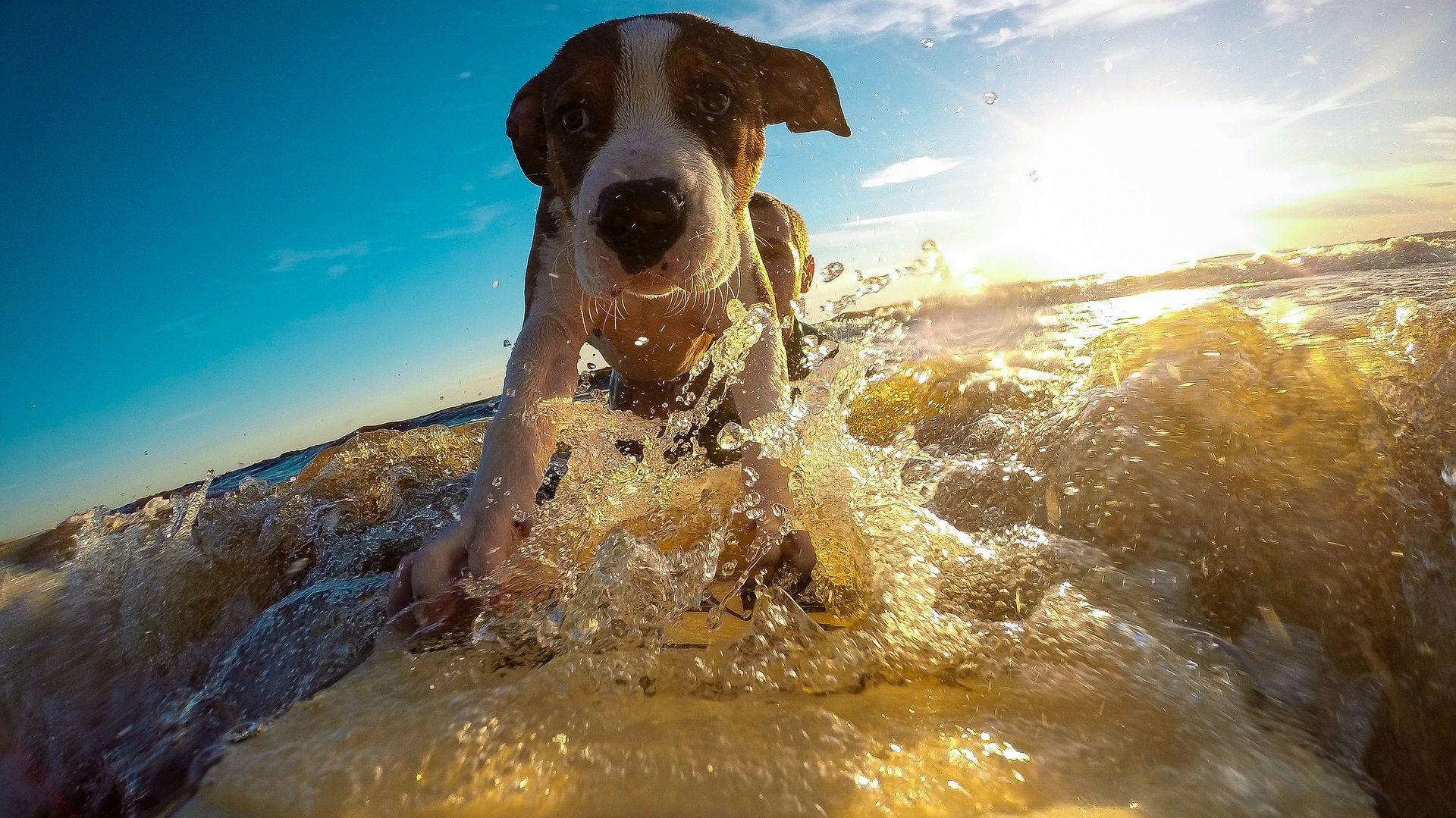 Vakantie Checklist Voor Uw Huisdier