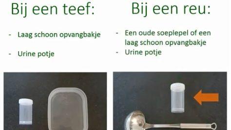 Instructievideo Over Opvangen Van Urine Bij De Hond En Kat