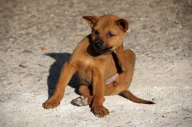 Help Mijn Hond Of Kat Heeft Vlooien!