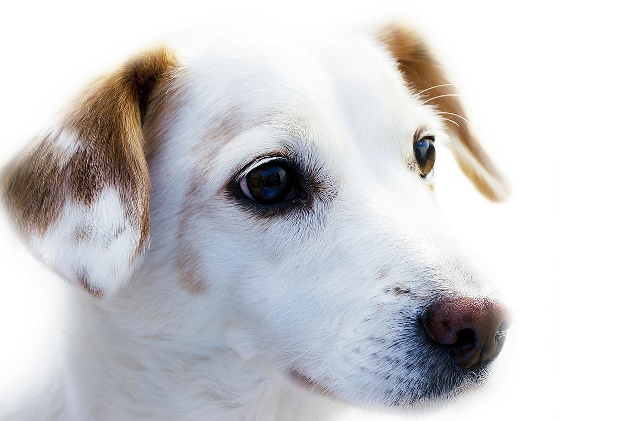 Is Het Vaccineren Van Uw Hond Of Kat Belangrijk?