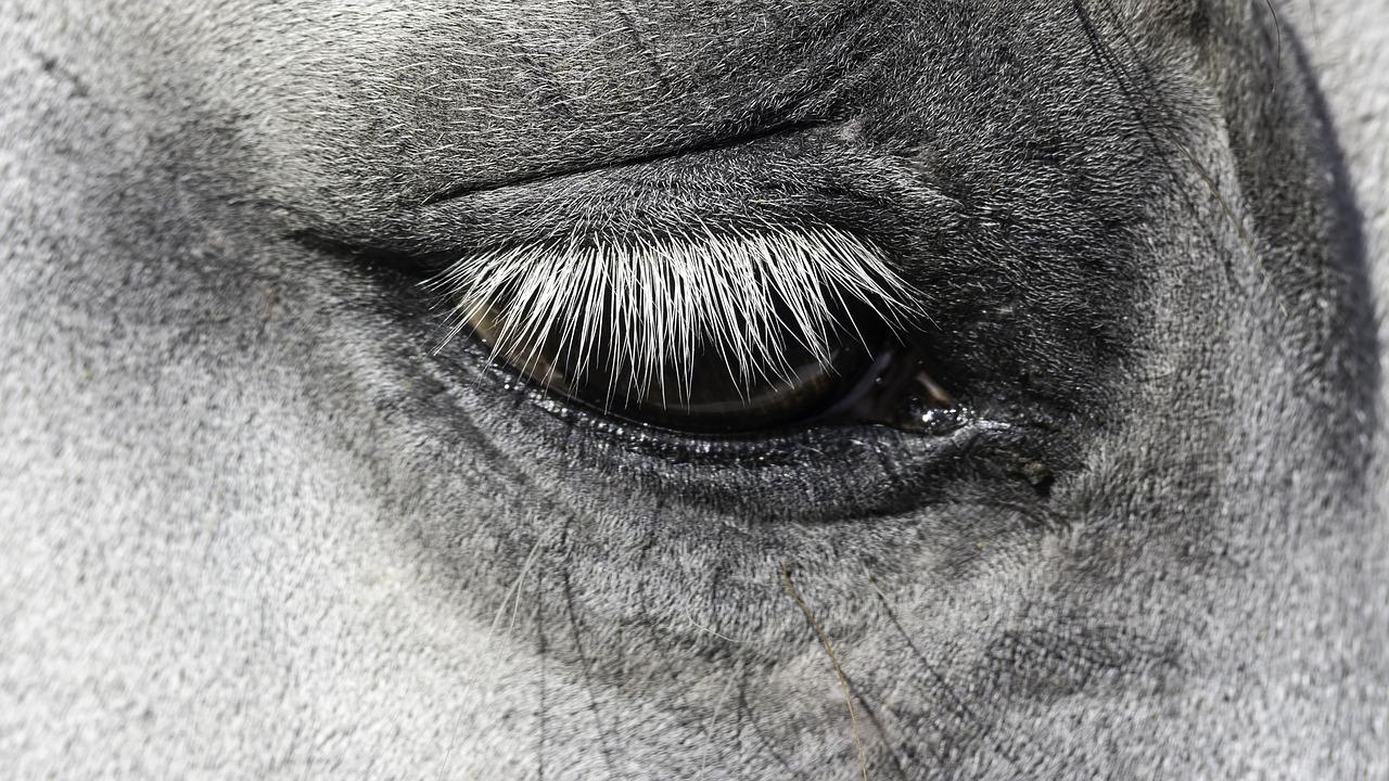 Rhinopneunomie Bij Paarden